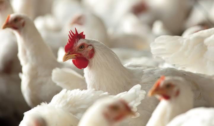 Modificación a la ley federal de sanidad animal
